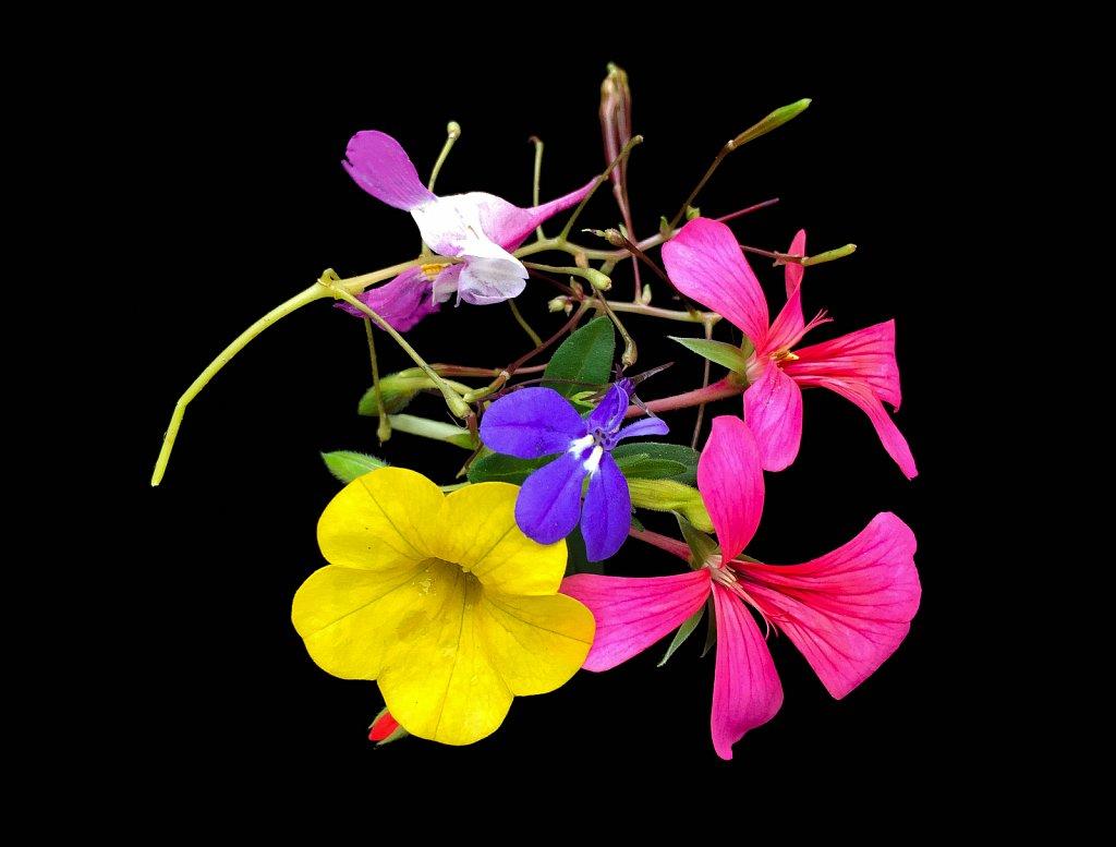 Fleurs-expo.jpeg